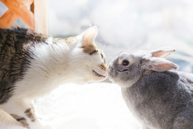 うさぎ 猫 ねこ ペット