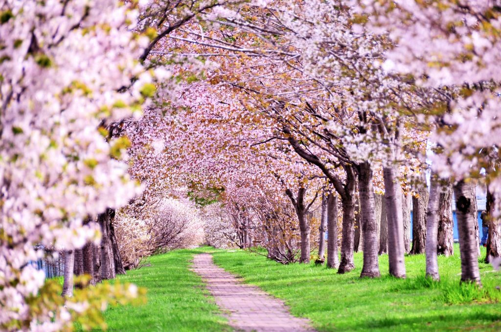 春を楽しむ要素がギュッと詰まったお花見に出かけよう!