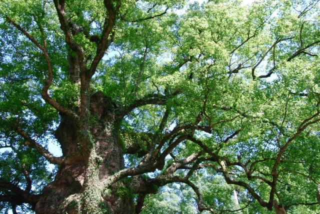 木 天然木