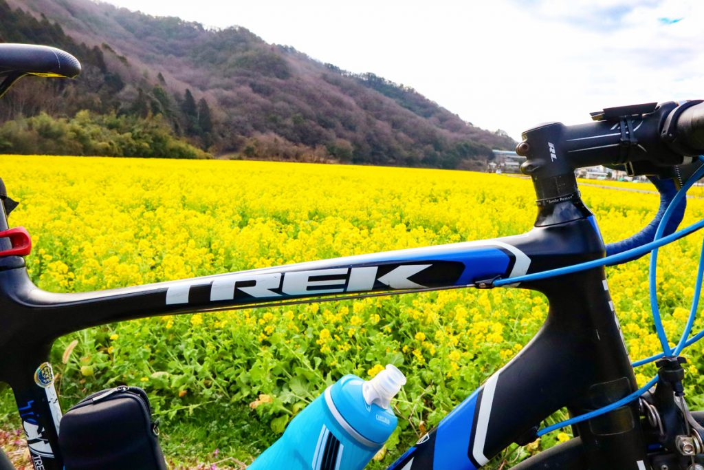 【お出かけスポット】姫路市夢前町玉田の菜の花畑がキレイです!