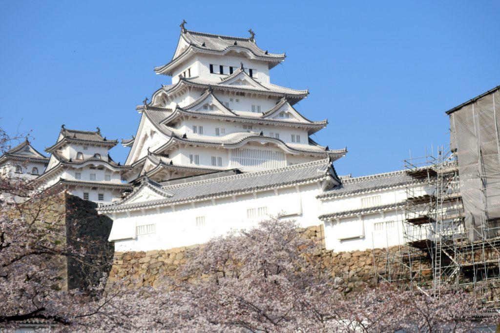 【お出かけスポット・桜の情報】姫路城の桜は満開でした!-4月4日情報